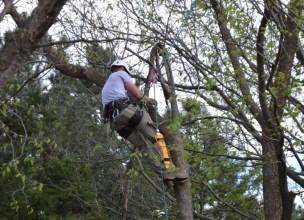 Nick Tree Prune (42)