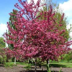 Grimms Gardens Spring Favorites