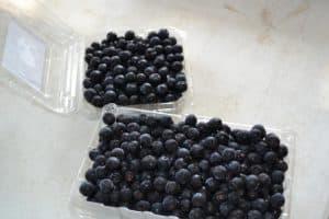 Fresh Picked Aronia Berries