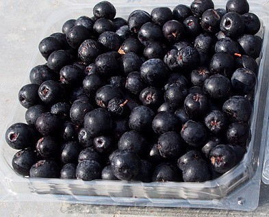 Aronia Berry Recipes-The Miracle Fruit