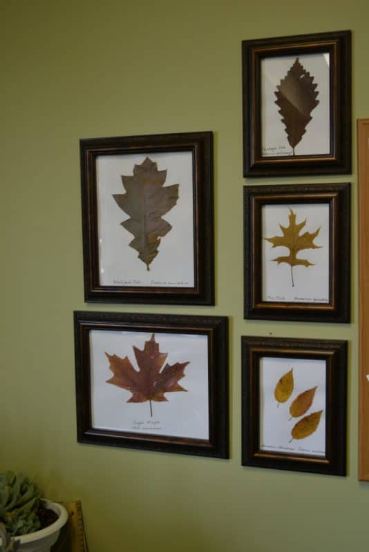 Using Nature for Fall Crafting