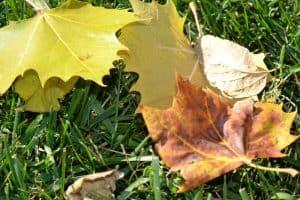 Fallen Leaves2