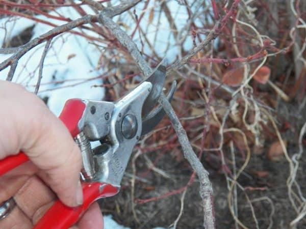 Pruning Fruit