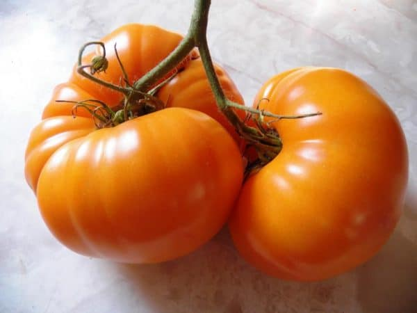 What is the fuss about? Tomato Grafting and the Home Gardener
