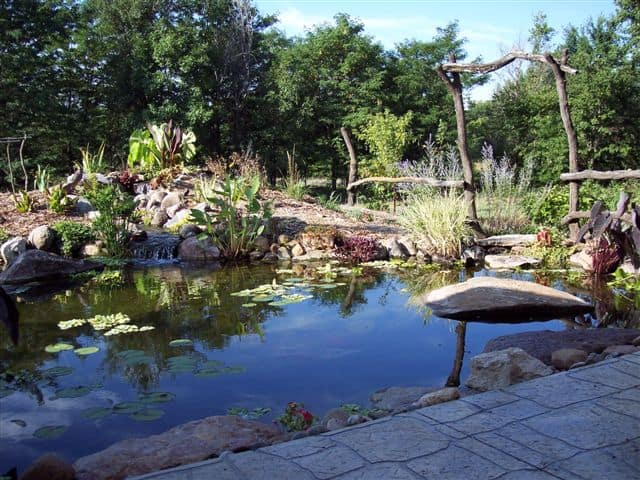 Pond and stepping stones