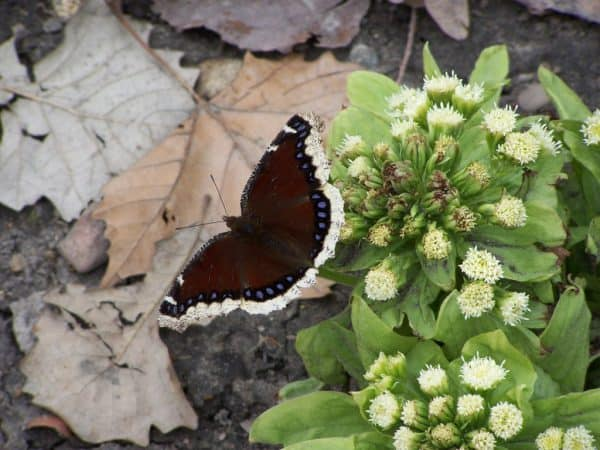 Planting Natives for Pollinators