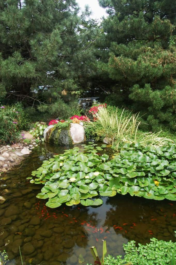 Pond maintenance.