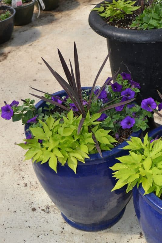 Tips and Tricks for Planting Containers