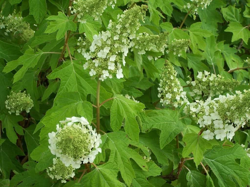Los arbustos mojados de sombra - The Sensible Gardener