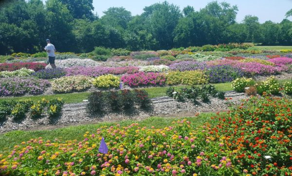 A Trip to the K-State Bedding Plant Trials