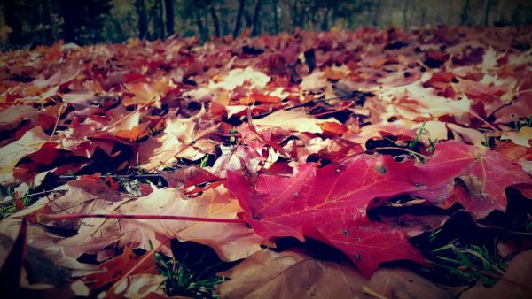 What To Do About Autumn