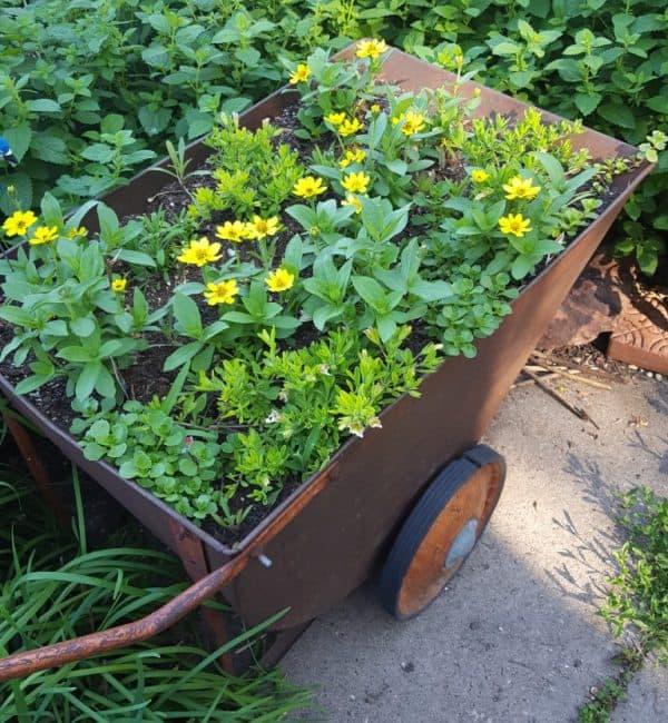 Wheelbarrow Gardens