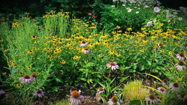 Stacking the Deck – Heat Loving Perennials for Summer