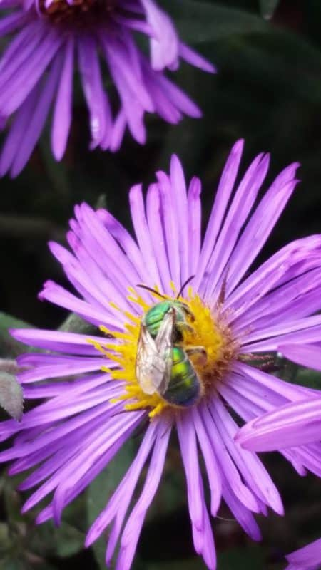 Top 5 Plants for Pollinators – September