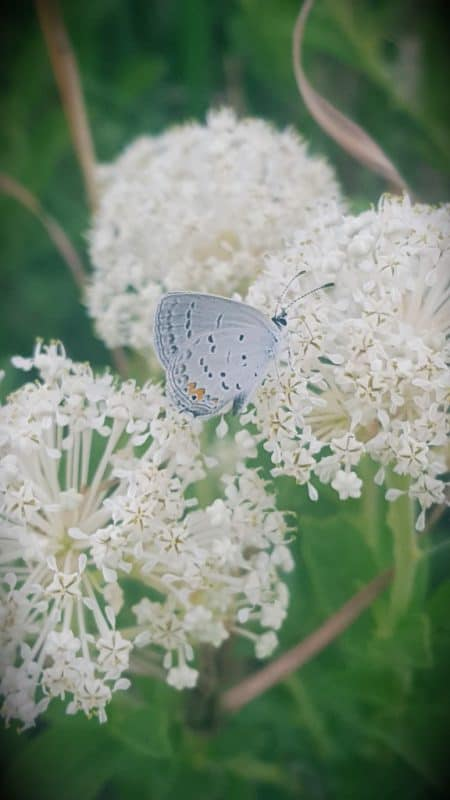 Best Pollinator Perennials for April-May