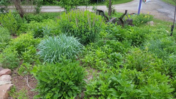Favorite Natives: A Look Through the Author's Garden