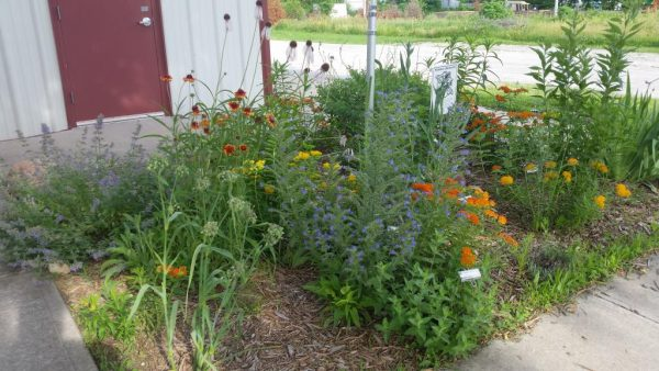 9 Steps to a Pollinator Paradise