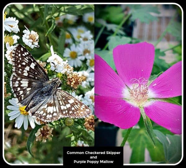 15 Host Plants for Butterflies