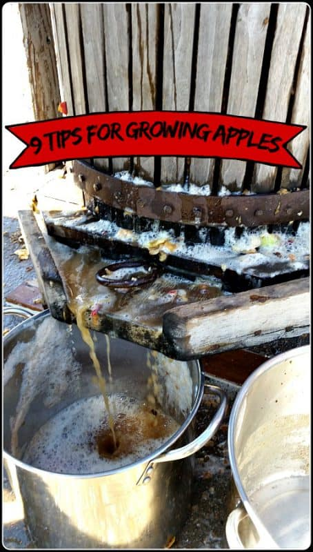 7 Tips for Growing Apple Trees