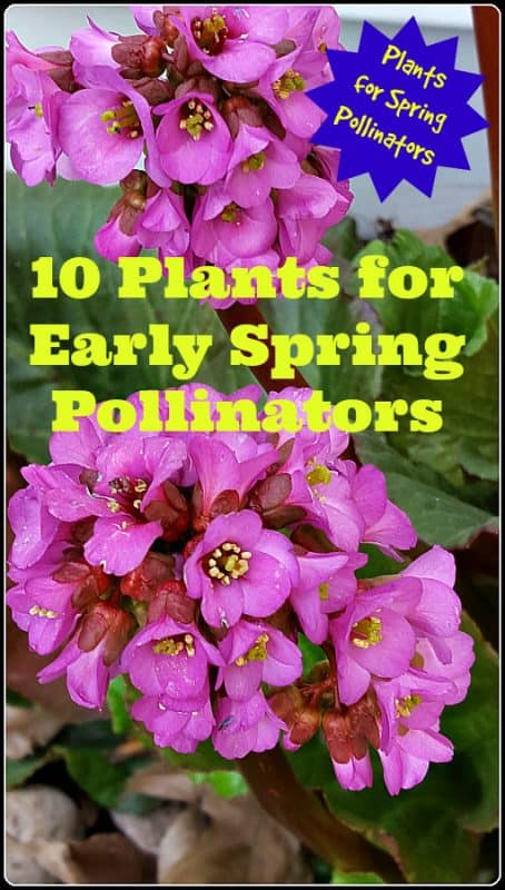 10 Early Spring Flowers for Pollinators