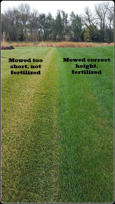 8 May Tips for the Lawn