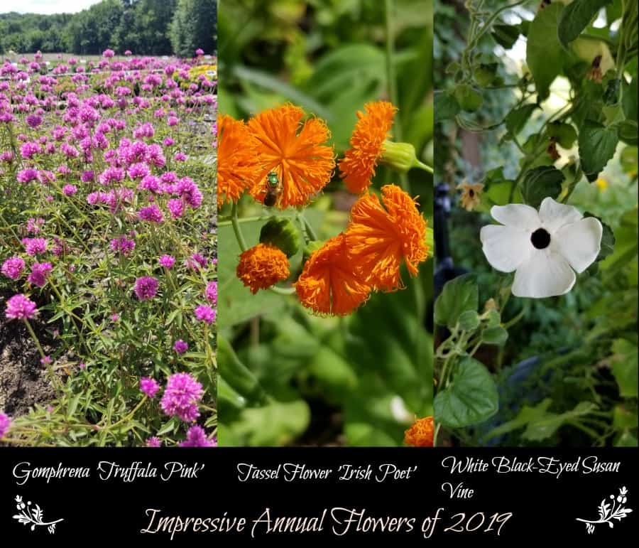 Year In Review Annual Color Grimm S Gardens