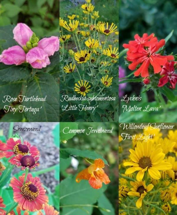 Kansas Gardener's Garden August-Septemer