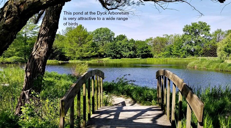 Pond at the Dyck Arboretum