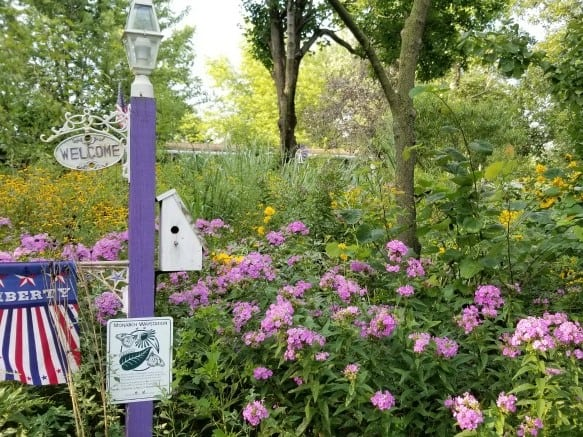 Perennials for Butterfly Habitats