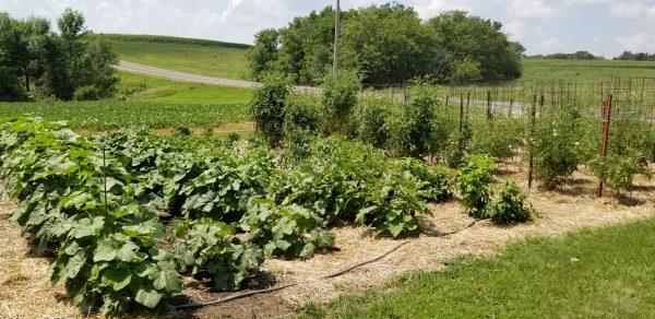 Planning Next Year's Vegetable Garden