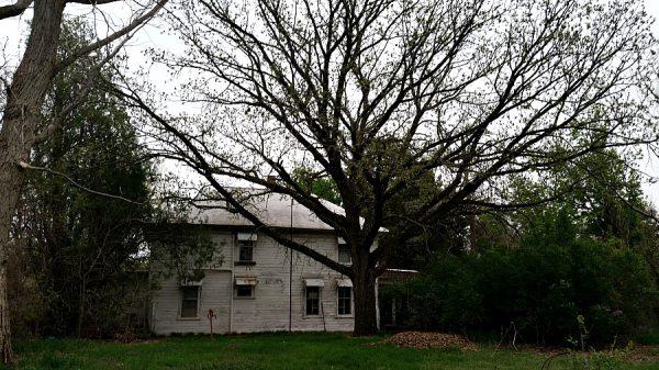 Plant of the Week: Bur Oak