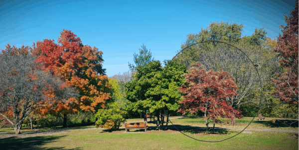 10 Best Trees for Autumn Color
