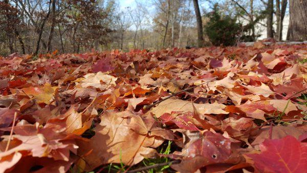 November Tips for the Garden