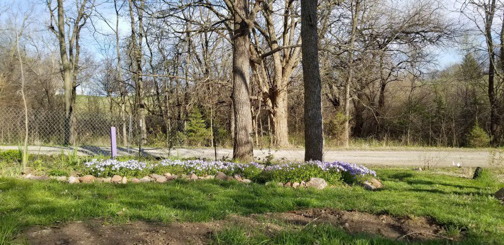 native shade border garden
