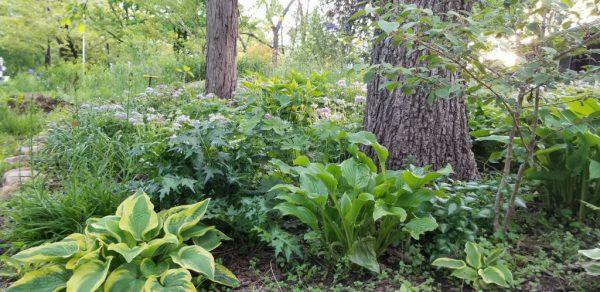 The Kansas Gardener's Garden – 2020