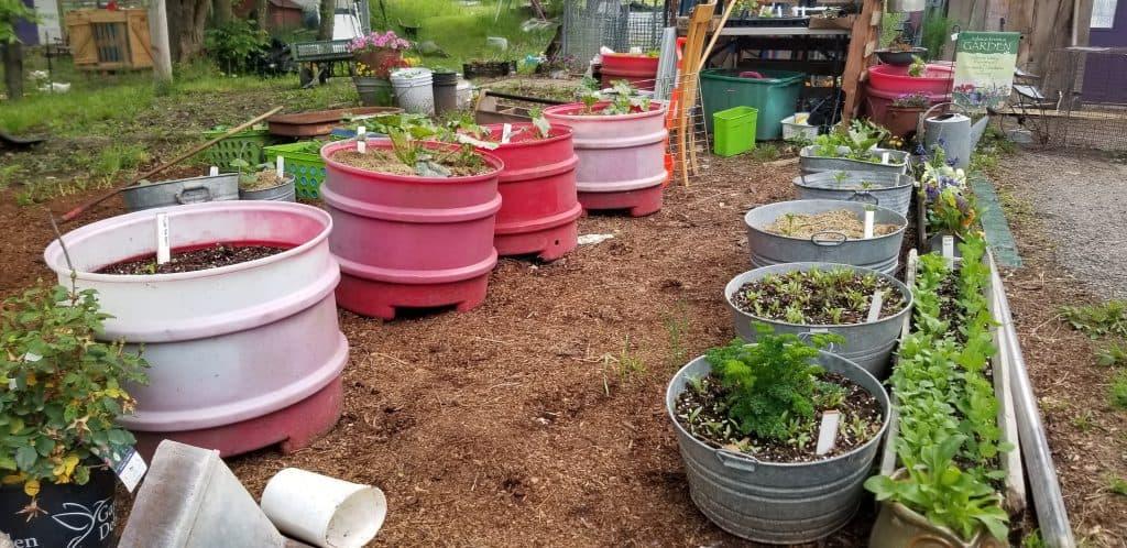 the tub garden