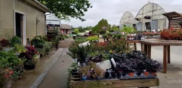 Grimm's Gardens 2020 – A Look Through the Gardens