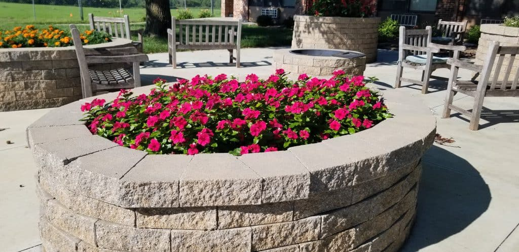 annuals in raised beds