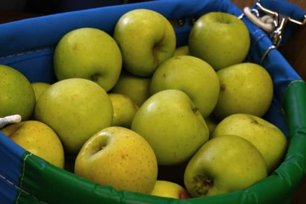Growing Fruit – Problems of Apples and Pears