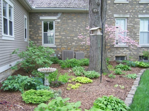 Shade Gardening: Creation and Maintenance
