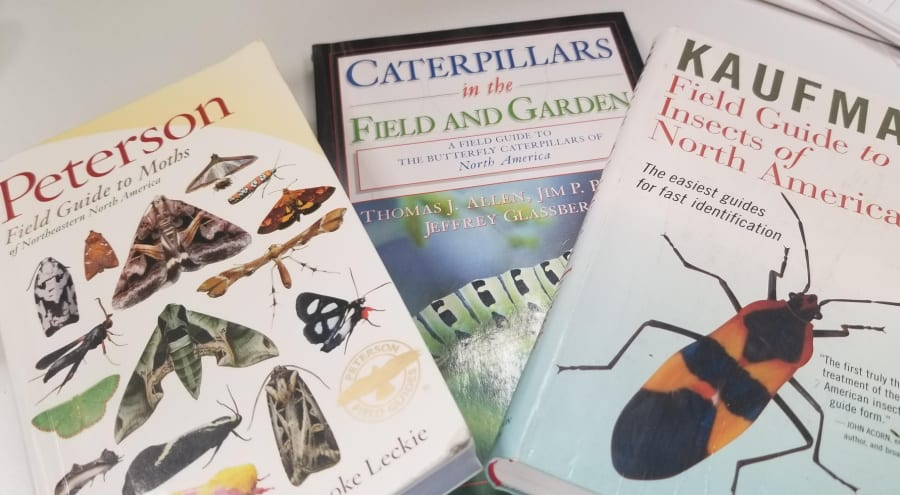 identify your pollinators with field guides