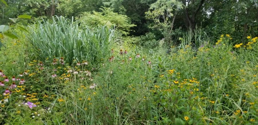 A meadow garden is great for pollinators
