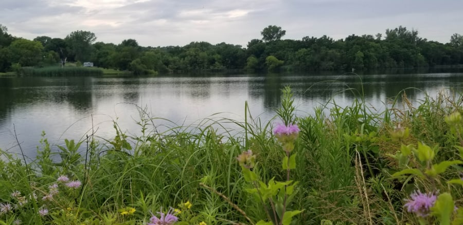 Prairie Lake native grasses