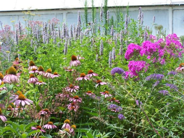 Cottage Style – Reimagining America's First Gardens