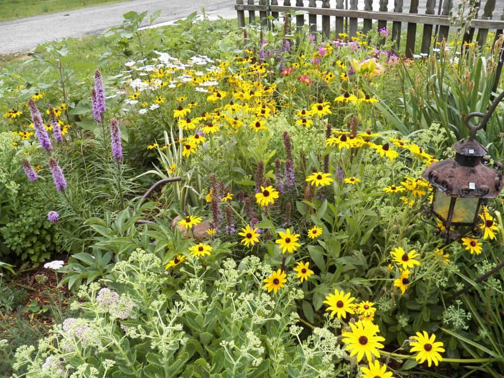 landscape bed of perennials