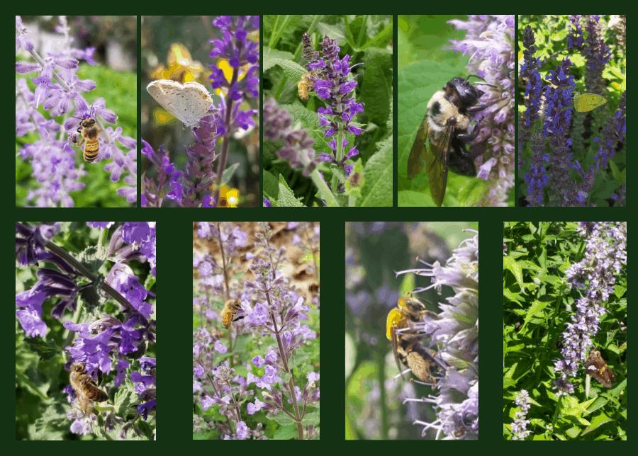 pollinators of purple flowers