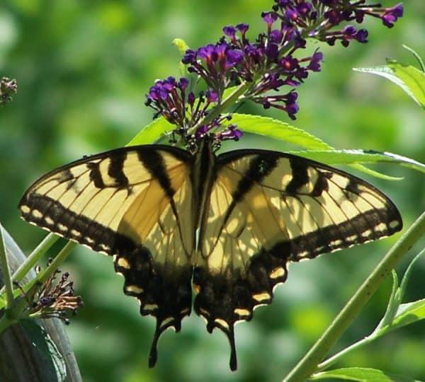 Build a Butterfly Garden in 9 Steps