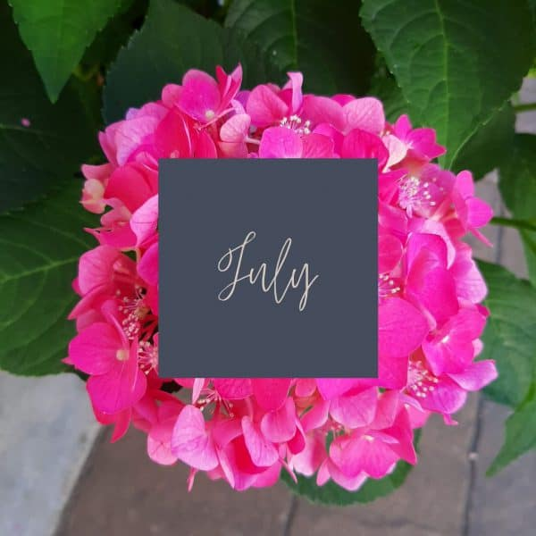 Pink hydrangea blossom with July in written in the middle and a link to July plant care