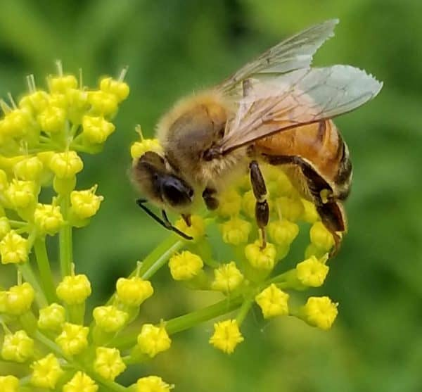 Plants that do not Attract Bees