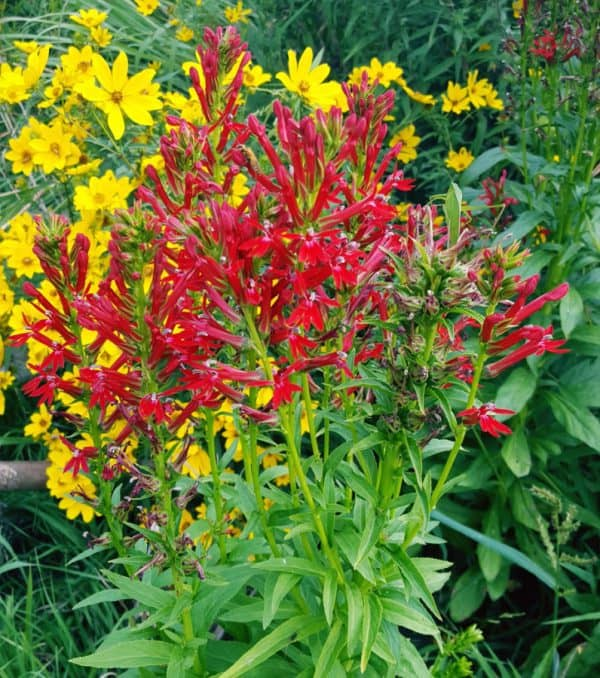 Best Native Plants (not cultivars) for the Landscape